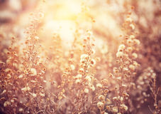 Beautiful floral field Stock Photography