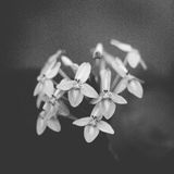 Beautiful floral . Film grain. Vintage film  conceptual old retro aged Stock Images
