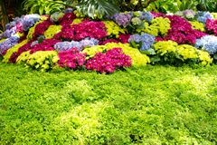 Beautiful floral garden Royalty Free Stock Photos