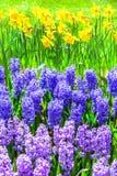 Beautiful floral garden. Keukenhof park in Holland Royalty Free Stock Image