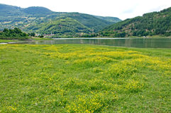 Beautiful floral meadow on the shores of Gazivoda Lake. Gazivoda lake is an artificial lake. It was created by building a dam on the river Ibar. Part of the lake royalty free stock images