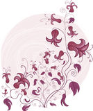 Beautiful Floral Ornament Royalty Free Stock Photography