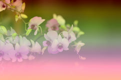 Beautiful floral patterns Vintage background blur for Gradient. Royalty Free Stock Photography