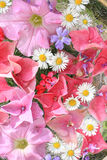 Beautiful, floral pink, background Stock Image
