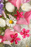 Beautiful, floral pink, background Royalty Free Stock Image