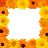 Beautiful Floral rectangle frame. Floral arrangement of yellow and orange calendula flowers on isolated white background for design. Flat lay. Web banner or Royalty Free Stock Photos