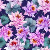 Beautiful floral seamless pattern. Large pink and lilac lotus flowers with green leaves on dark purple background. royalty free illustration