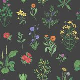 Beautiful floral seamless pattern with meadow herbs on black background. Gorgeous wild flowers and blooming herbaceous Stock Photography