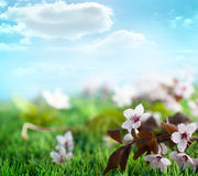 Beautiful floral spring background Stock Image
