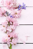 Beautiful floral, spring background with Japanese cherry flowers Stock Images