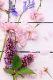 Beautiful floral, spring background with Japanese cherry flowers Stock Photography