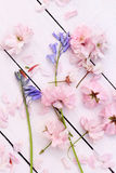 Beautiful floral, spring background with Japanese cherry flowers Royalty Free Stock Image