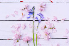 Beautiful floral, spring background with Japanese cherry flowers Stock Photos