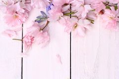 Beautiful floral, spring background with Japanese cherry flowers Royalty Free Stock Photo