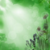 Beautiful floral summer backgroung Stock Image