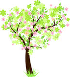 Beautiful floral tree. Beauty tree with green leaves and flowers Stock Image