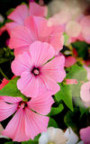 Beautiful floral vertical background Royalty Free Stock Images