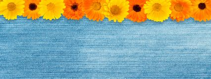 Beautiful Floral Vintage Wide angle Web banner. Floral pattern border of yellow and orange calendula flowers on blue denim background. Top view. Flat lay Stock Photos