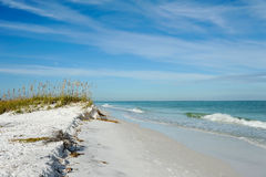 Beautiful Florida Coastline. Beautiful Sand Dunes and Sea Oats on the Coastline of Anna Maria Island, Florida stock image