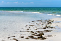 Beautiful Florida Coastline Stock Images