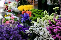 Beautiful florist with samples of white, pink, blue, lilac, green, yellow flowers royalty free stock photography