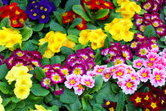Beautiful floristic composition. Close up of bright flowers Royalty Free Stock Photo