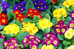 Beautiful floristic composition. Close up of bright flowers Stock Photography