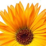 Beautiful flower Royalty Free Stock Photography