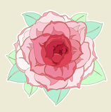 Beautiful flower. Vector colorful flower with pink petals and green leaves Royalty Free Stock Image