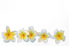 Beautiful flower. On white background Stock Photos