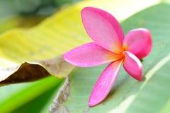 Beautiful flower Royalty Free Stock Image
