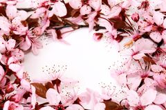 Beautiful flower stock images
