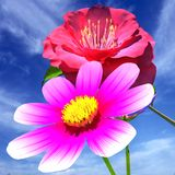 Beautiful Flower Royalty Free Stock Images