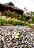 Beautiful flower on alley with bungalow Stock Photo