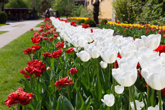 Beautiful flower alley Royalty Free Stock Images