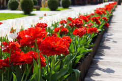Beautiful flower alley Stock Photo