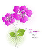 Beautiful flower background Royalty Free Stock Images
