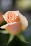 Beautiful flower background Royalty Free Stock Photo