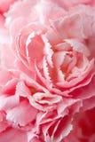 Beautiful flower background stock photos