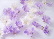 Beautiful flower background. Beautiful white and purple flower background stock photo