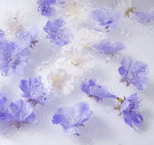 Beautiful flower background. Beautiful white and blue flower background stock image
