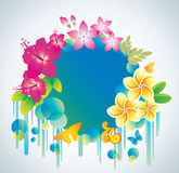 Beautiful flower background with exotic flower. Stock Image
