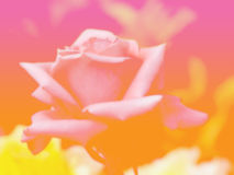 Beautiful flower background flowers made with color filters Stock Photography