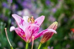 Beautiful flower background royalty free stock photos