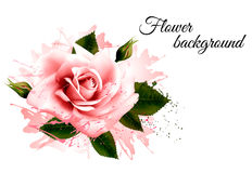 Beautiful flower background with a pink rose. Royalty Free Stock Images