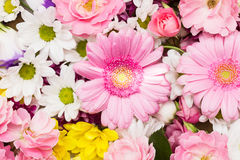 Beautiful flower background Royalty Free Stock Photos