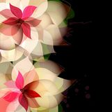 Beautiful flower background with splashes. On black Royalty Free Stock Image