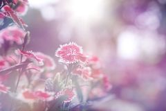 Beautiful Flower background. The Beautiful Vintage flower background royalty free stock photography