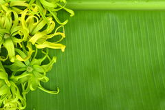 Beautiful flower on banana's leaf. Stock photo Stock Photography