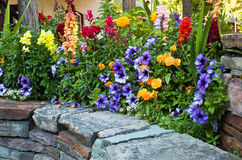 Beautiful flower bed Stock Images